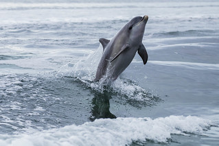 Yet another dolphin shot..