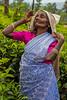 Tea Leaf Picker, Rothschild Tea Estate, Sri Lanka (bfryxell) Tags: pussellawa rothschildteaestate srilanka tealeafpicker teaplant teaplantation worker