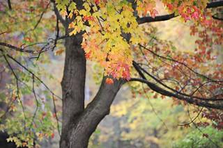 ~Autumn is winding down...soon,