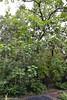 DSC_3166 (facebook.com/DorotaOstrowskaFoto) Tags: ogródbotaniczny kwiaty