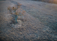 Novemeber Tree (sephrocker) Tags: phantom4 drone aerial viewfromabove fall autumn tree sunset dark landscape