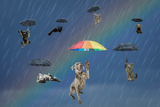 Raining Cats and Dogs Second attempt