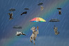 Raining Cats and Dogs Second attempt (Chris Willis 10) Tags: rainbow umbrella illustration vector protection sky flying nature backgrounds cloudsky blue danger concepts ideas men weather parasol risk business autumn raining catsanddogs cat dog rain