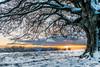 tramonto a Canfaito (Luigi Alesi) Tags: italia italy marche macerata san severino canfaito riserva naturale del monte vicino albero tree tramonto sunset paesaggio landscape scenery natur anature inverno einter neve snow fujifilm xm1 raw