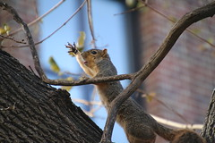 177/365/3464 (December 5, 2017) - Autumn Squirrels in Ann Arbor at the University of Michigan (December 5th, 2017)