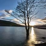 Loch Tay Lone Tree_G5A5381 thumbnail