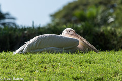 171206 Honolulu-11.jpg (Bruce Batten) Tags: shadows usa reflections plants trips occasions zoos subjects birds honolulu animals vertebrates businessresearchtrips hawaii locations unitedstates us