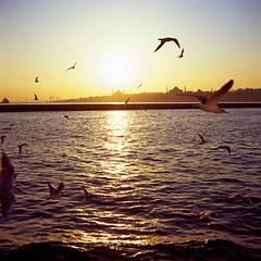 From Asia to Europe (tobotronium) Tags: istanbul turkey türkei rollei rolleicord fuji velvia bosporus intercontinental ferry pigeons sunset mosque 100f seagull