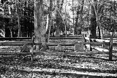 R2-014-5A (David Swift Photography) Tags: davidswiftphotography mayslanding newjersey graveyards familyplots graves historiccemeteries forest 35mm film atlanticcountypark nikonfm2 ilfordxp2