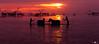 Beautiful culture (Pith_Sir) Tags: man clean shower horse water lagoon sunrise sun cloud cloudy sunset culture asia phatthalung thailand people river silhouette dark shadow