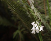 Hidden Treasure (Sarah_ES) Tags: 7dwffriday flora white bell hidden treasure