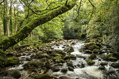 Lovely Dartmoor (Explored) (sharongellyroo) Tags: holidays devon dartmoor cadovertoshaugh river