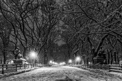Snowy Central Park (LindaGrantPhotography) Tags: centralpark newyorkcity newyork nyc blackandwhite snow