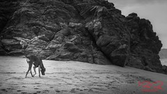 Beach dogs (RoManLeNs) Tags: dog day beach exploring curiosity blackandwhite desaturated rocks pets romrom rom romanlens