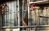 2017_印象香港05 (米漿 專賣店) Tags: 懷舊 貓 cat xt2 xf35