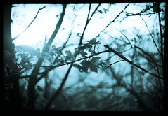 analogico: l'origine. (Emanuela Pepe) Tags: natura rami foglie bosco fotografia analogica monocromo fujica