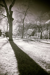 memories fade like shadows of the day (Brian M Hale) Tags: wood park hudson ma mass massachusetts outside outdoors ir infrared lifepixel 830nm black white bw brian hale brianhalephoto playground tree shadow