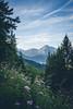 Look right through (--StadtKind--) Tags: wald forest sky landscape landschaft landscapephotography naturephotography nature hiking tirol thanneller reute lechtal austria stadtkind sonyilce7m2 sonyfe1635mmf4zaoss teamsony