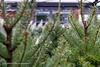 Christmas woodland (Paul Henman) Tags: toronto 8thanniversaryparty 2017 torontophotowalks paulhenman evergreenbrickworks ontario topw2017rs paulhenmanphotographyca httppaulhenmanphotographyca brickworks topw