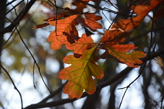 Fall Leaves (Sophie Crossley) Tags: fall leaves leaf colors red orange yellow scenery trees lake forest autumn season change branches
