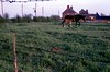img009 (foundin_a_attic) Tags: horse 1970s hourse