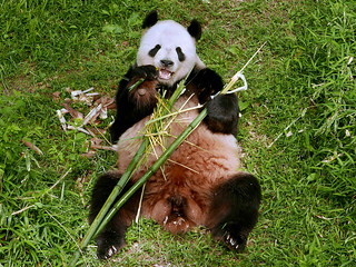 Tian Tian (They say a picture's worth a thousand words–or–it just leaves you speechless...) 2017-05-10 at 9.30 AM