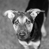 Rio03Dec201724-Edit.jpg (fredstrobel) Tags: dogs pawsatanta phototype atlanta blackandwhite usa animals ga pets places pawsdogs decatur georgia unitedstates us