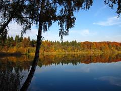 Herbst in Mörfelden-Walldorf (nordelch61) Tags: hessen mörfeldenwalldorf landkreis grosgerau waldsee badesee herbst herbstlich laubfärbung bäume ufer strand see