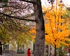 Almonte serene (Kens images) Tags: fall rural colours trees leaves rainbow historic structure balance country town beauty autumn ontario canada person lonely thought art