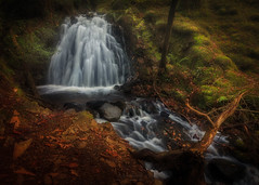 Just Let Go (Adam West Photography) Tags: adamwest cumbria district england forest gill glen lake longexposure mary mystical river stream tarnhows timelapse tom uk waternfall wood woodland mmagical