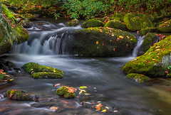 Autumn Cascade (Ping...) Tags: gsmnp greatsmokeymountains smokies fall autumn creek flow boulder moss leaves stream light cascade greatsmokeymountainsnationalpark nationalpark