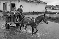Boy and His Dad (Geraldo Tarallo Assis) Tags: boy his dad father parent donky horse carriage water flooded road street paraty rj rio de janeiro cloudy bw black white b w canon 5d mark iv 4 35 mm 35mm happy staring looking people child kid