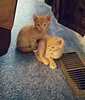 Fur Babies (Captured by AMK) Tags: kittens felines cats project365