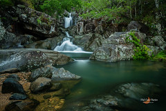 20171021-IMG_827320171021.jpg (Phil Copp) Tags: paluma tropicalrainforest qldparks palumarangenationalpark rainforest nationalpark tropical worldheritage northqueensland queensland aippqld2018 aippawards