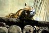 Bali 2008 (Martin Wippel) Tags: bali indonesien indonesia hindu tempel reisterrassen sarong nusadua jimbaran denpasar uluwatu ubud jatiluih jetiluih puraluhurbatukau gunungbatukau gunungbatur lakebatur batur kuta zoo balizoo komodowaran komododragon buddha luckybuddha garuda ganesha wishnu martin wippel julia boyer martinwippel juliaboyer meliábaliresort gunungagung kutabeach hardrockhotel puratanahlot puraluhurbatukaru jatiluwih jetiluwih puraulundanubratan puratamanayun goagajah elephantcave puragunungkawi tegallalang bualuvillage purauluwatu