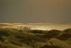 Donkeys at dusk (Jaedde & Sis) Tags: blåvand donkey bunker dusk cloud dunes light challengefactorywinner thechallengefactory