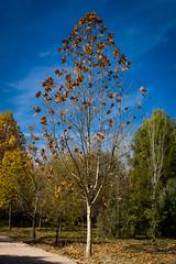Fuentes del Marques_ 26112017-152 (Pyass2015) Tags: caravaca fuentesdelmarques bosque forrest landscape parque murcia autum otoño