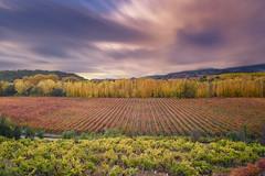 colors of Rioja (Javy Nájera) Tags: larioja atardecer castillo chopos color luz naturaleza nubes paisaje uva otoño viña viñedo fugas larga exposición javynájera