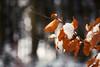Snow, leafs & bokeh (Sebo23) Tags: snow leaf schnee blatt bokeh bokelisious makro macro makrofotografie wald forest nature naturaufnahme natur canon6d canon10028l