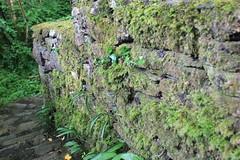 IMG_3133 (avsfan1321) Tags: connemaranationalpark connemara nationalpark ireland countygalway green lush landscape plants moss