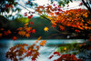 Wintry (moaan) Tags: kobe hyogo japan jp maple mapleleaves japanesemaple momiji autumncolors autumnleaves fall fallcolors fallfoliage dof depthoffield bokeh bokehphotography nature naturephotography utata 2017 leica mp leicamp type240 noctilux 50mm f10 leicanoctilux50mmf10