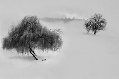 Bianco inverno (Zz manipulation) Tags: art ambrosioni zzmanipulationj winter inverno bianco neve white tree albero natura