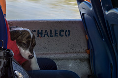 River snooze (kzoop) Tags: amazon colombia puertonariño travel vacation southamerica puppy dog dogs