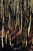 Autumn in Holycross Moutains - Poland (Wojciech Rozalski) Tags: forest autumn trees tree wood woods sun fall holycross swietokrzyskie świętokrzyskie góryświętokrzyskie wr wojciechrozalski wrozalski wojciechróżalski moutains light delight postcard outdoor leaf leafs