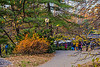 1339_0564FLOP (davidben33) Tags: newyork central park street streetphotos people nature trees bushes leaves colors green yellow sky cloud lake portraits women girl cityscape landscape autumn fall 2017 beaut