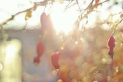 Sunshine (Elliot the Giraffe) Tags: sun bokeh light