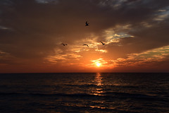 end of day........ (all one thing (off and on...)) Tags: endofday sunset gulfofmexico water sky clouds birds happythanksgiving nature beach beauty thankful