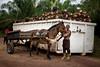 Oil palm in Brazil (CIFOR) Tags: economics landtenure landuse livelihoods income localpeople biofuels people males householdexpenditure men socioeconomics landclearance bioenergy oilpalms employment deforestation communityforestry landmanagement biodiesel employmentopportunities plantations householdincome santarém pará brazil br smallholders