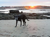 49/52/17 His sunset years (Hodgey) Tags: dog josh beach sunset 52weeksfordogs maine
