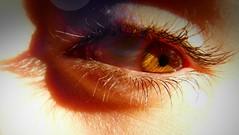 Attention (Astral Eye) Tags: nature eye oeil animal art zoom extérieur été enfant yellow rayon humain lumière human sun intérieur organique organic portrait soleil doré dégradé flou green homme jaune light life macro wild white couleur color colors vert blanc naturel noir natural net sourcil peau